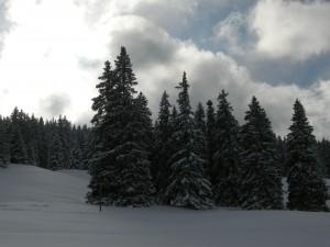 Les sapins couverts de neige se découpent sur un fond de ciel nuageux